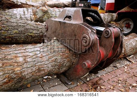 Grip with tree trunk