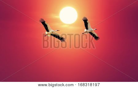 Beautiful white storks against soft red sky concept of love