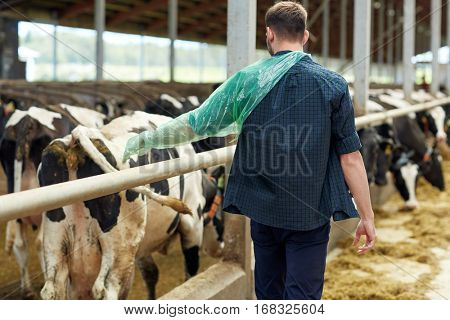 agriculture industry, farming, people and animal husbandry concept - man or farmer in veterinary glove with herd of cows in cowshed on dairy farm