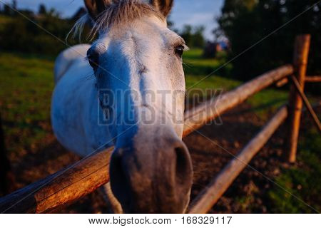 Funny closeup of a horse looking at the camera