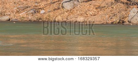 Landscape of a river with shoreline of dry grass and rocks and leafless trees and a thin layer of ice beginning at about midway in the river