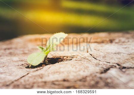 young plant growing in crack of the remains stumps.selective focus