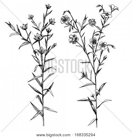 Hand drawn black and white flax flowers and seeds - vector illustration