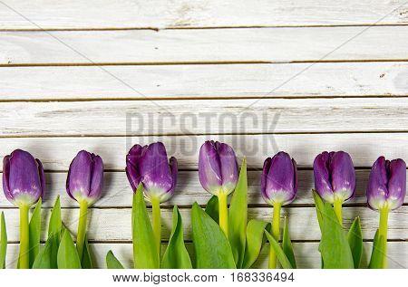 row of purple tulips on whitewashed wood