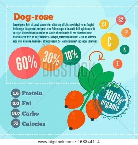 Dog rose concept infographics. Flat style template with dog rose vitamins and calories for market use. Organic food concept.