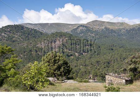 Pine forest of Pinus pinaster next to the reservoir of El Burguillo, Avila, Spain
