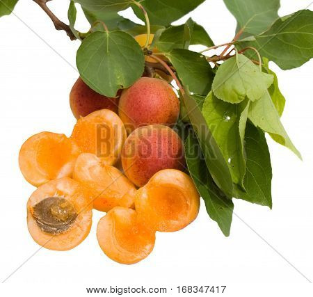 Branch with apricots. A few apricots sliced in half