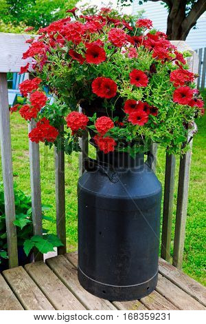 A planter filled with petunias and verbena on top of an old milk can.