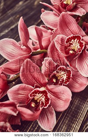 Orchid flowers with drops of water on wooden background