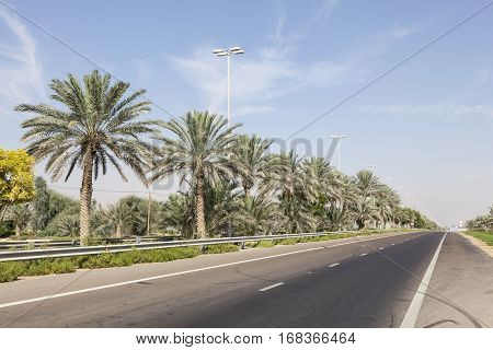 Street with palm trees in the desert town Mezairaa. Liwa oasis area Emirate of Abu Dhabi United Arab Emirates