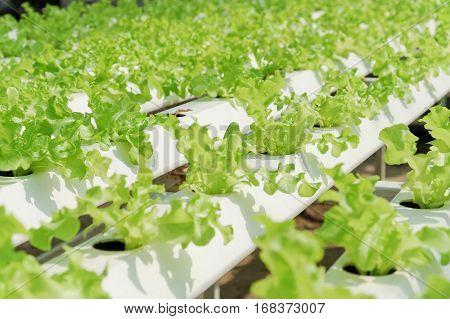 close up image of Hydroponics vegetable farm