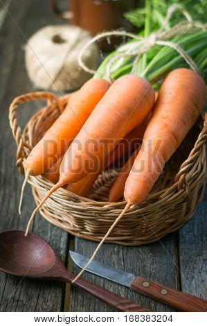 Fresh organic carrots with green tops in basket closeup. Harvest.