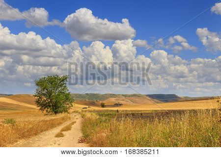 RURAL LANDSCAPE SUMMER.Between Apulia and Basilicata: countryside with cornfield dominated by a clouds.ITALY. Country road through wheat field. in the background farmhouses .