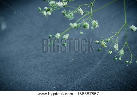 Dried White Flowers On Grey Background