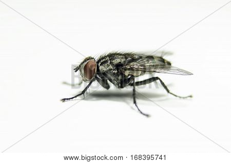 Macro view of nature fly machine in profile position