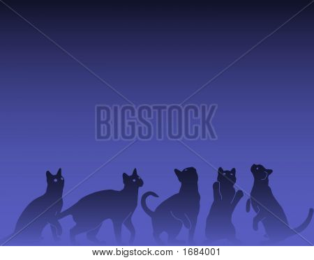 Vector background design of inquisitive cats looking up poster