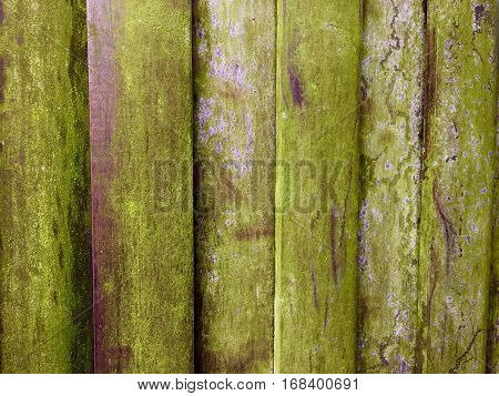 Green cover on an old wooden fence