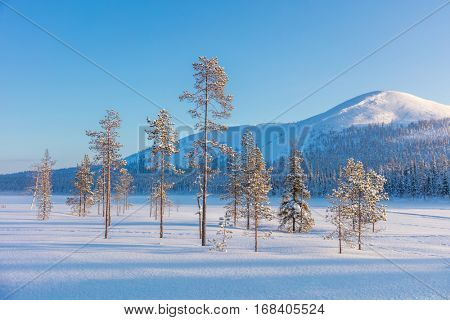Northern winter landscape - pine trees, forest and mountain cowered snow, beautiful and sunny winter weather