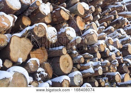 A large number of logs, stacked wood in the winter.