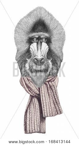 Portrait of Mandrill with scarf. Hand drawn illustration.