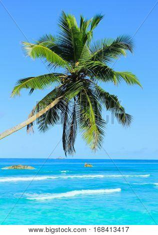 Seaside Coconut Wallpaper