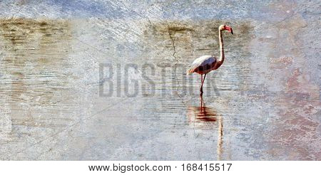 Close up of a lesser Flamingo in the water