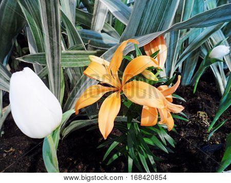 Forest Flower in a mini garden to show in public.
