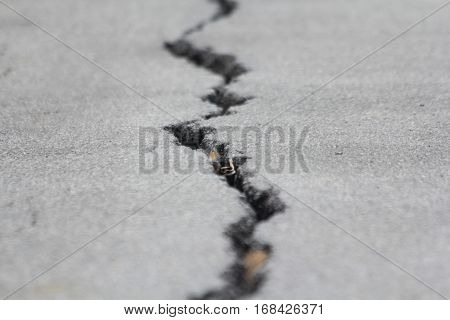 Picture is close-up to the road surface cracks