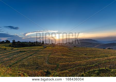 Sunset over mountain with rice field and stubble left after harvesting and corn field at Ban Pa Pong Piang Chiang Mai province Thailand