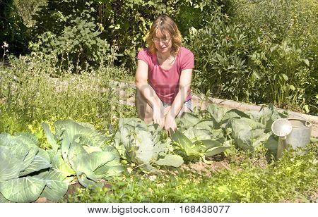 European woman weeding cabbage in garden. in aummer