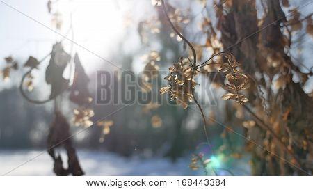 dry hops sun glare winter forest nature landscape