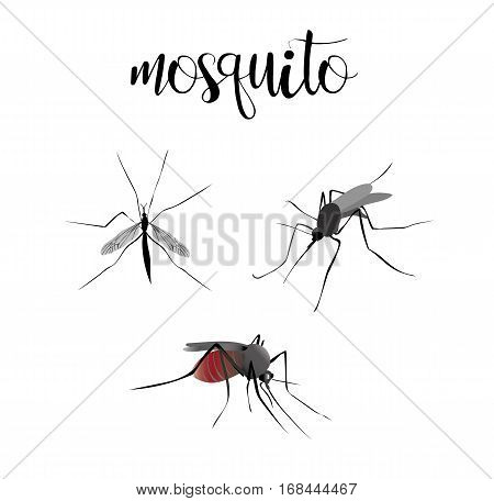 Mosquitoes are blood sucking. Insects set vector mosquitoes collection