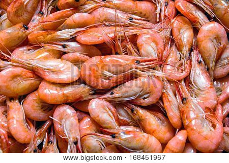 Shrimps background. The fish market Bergen Norway