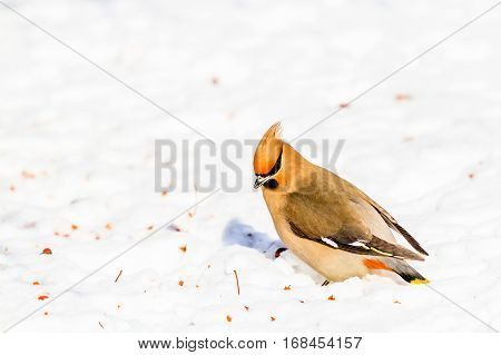 Bird during winter in Canada, New Brunswick, Moncton
