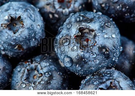 Blueberry close up with drops of water