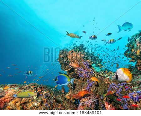Beautiful coral reef with colored fish around, underwater life. Copyspace for text