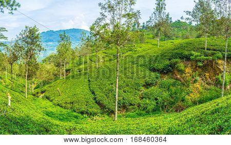 The Symbol Of Sri Lanka