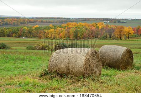 Hay bales and Fall Foliage on the farms and hills of upstate New York