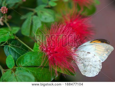 big tropical butterfly sitting on green leaf