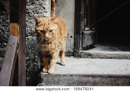 Cute Ginger Cat Standing At Wooden Door On The Background Of Europe City Street, Space For Text, Sad