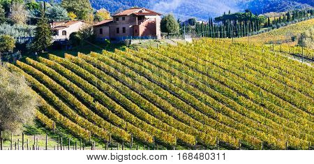 Pictorial italian countryside with vineyards. Tuscany region