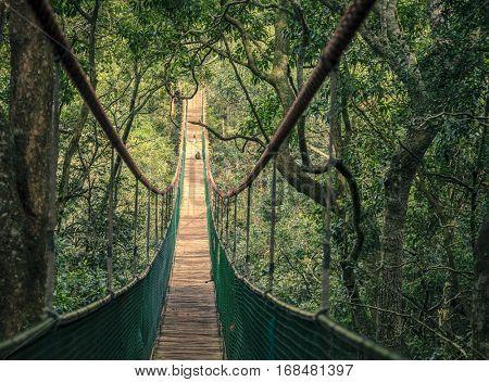 Hanging bridge in a jungle