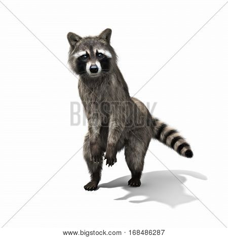 Funny sneaky conniving raccoon standing on his hind legs with its hands over its mouth laughing or taunting ,isolated on a white background. 3d rendering poster