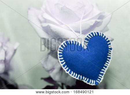 Background Valentine's Day One Blue Heart On The White Rose