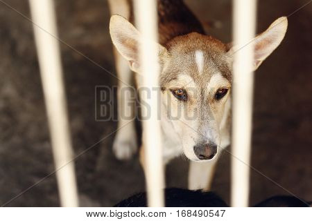 Sad Dog Looking With Unhappy Eyes And Big Ears In Shelter Cage, Sad Emotional Moment, Adopt Me Conce