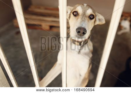 Sad Dog Looking With Unhappy Eyes  In Shelter Cage, Sad Emotional Moment, Adopt Me Concept, Space Fo