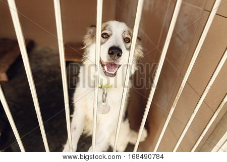 Cute Positive Dog Looking In  Shelter Cage, Happy And Sad Emotional Moment, Adopt Me Concept, Space