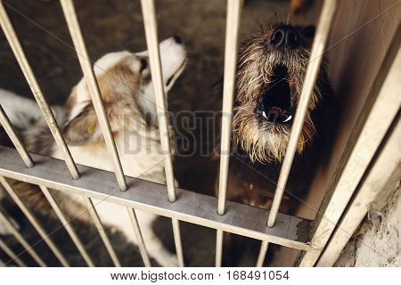 Cute Little Dog Puppy Howling In Shelter Cage, Sad Emotional Moment, Adopt Me Concept, Space For Tex