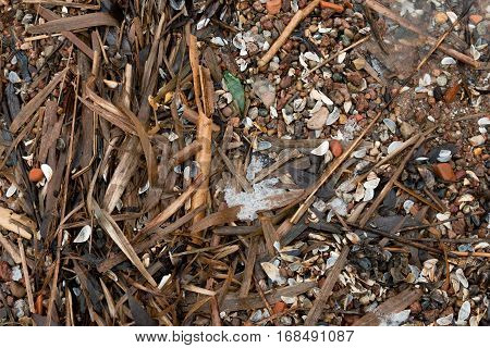 Belarus Minsk sea - March 7 2016 Spring beach near Minsk Sea is littered with a motley seashells and stones raw broken branches of a plants.