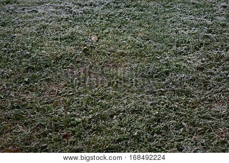 Belarus-  Frosty autumn morning green grass the first frost on the grass harmony on earth soft grass cold frosty weather